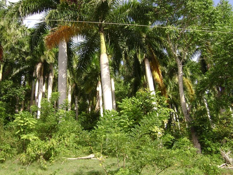 4 foto palmeras