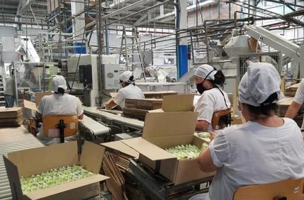 Suchel Camacho estabiliza producciones para el mercado en Cuba