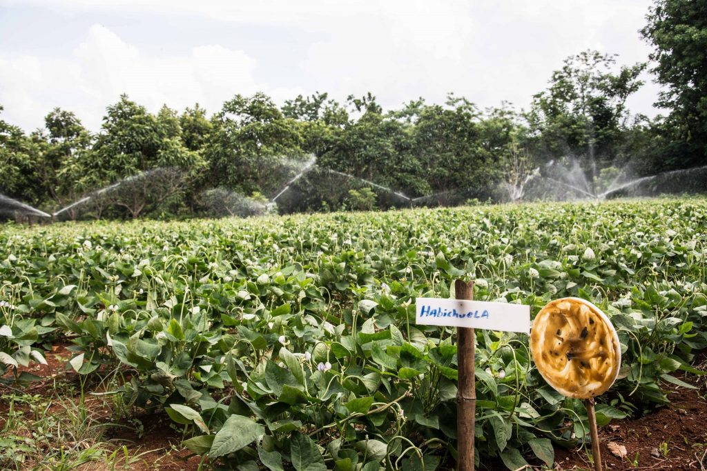 2 agroecologia cabaiguan