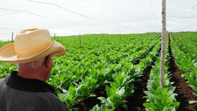 Cabaiguán celebra día del Trabajador Agropecuario (+ Fotos)
