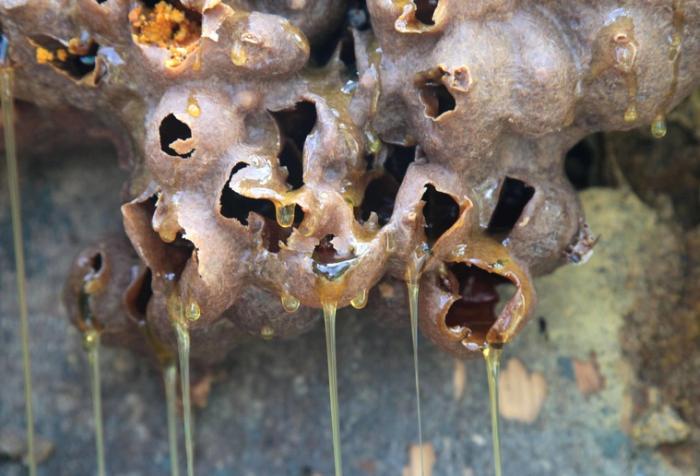 miel de abeja 3 foto oscar alfonso