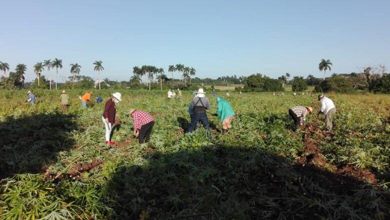 Agricultores cabaiguanenses rindieron homenaje a Fidel