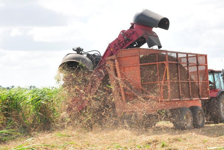 cosechadora de cana central uruguay 2 foto vb