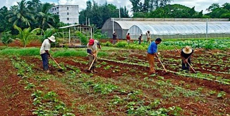 2237 cuba agricultura