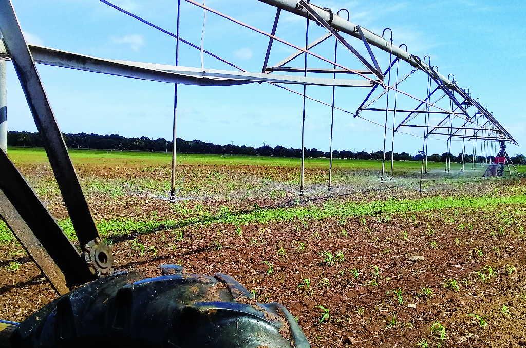 riego electrificado en la agricultura espirituana foto jose luis camellon